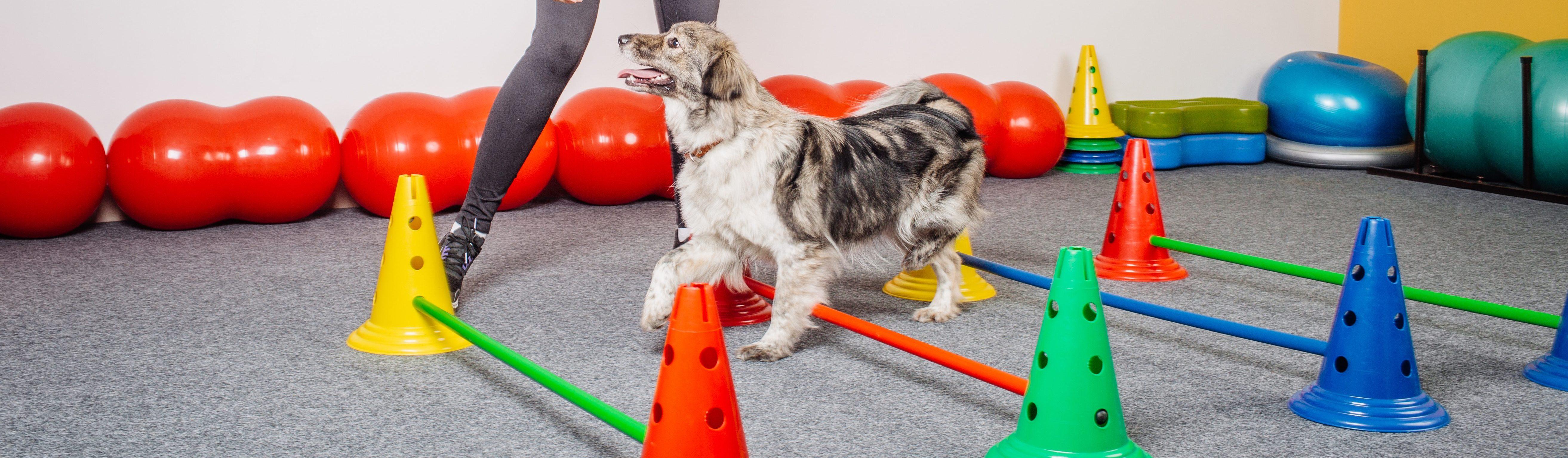 Hond fitness